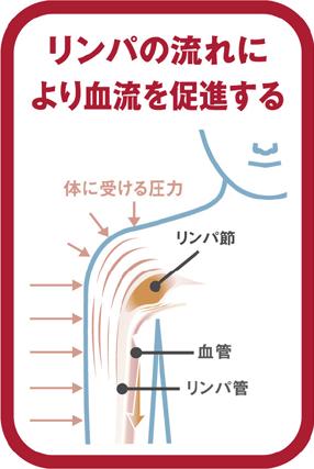 リンパの流れにより血流を促進する